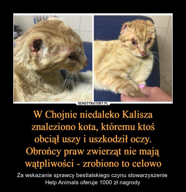 W Chojnie niedaleko Kaliszaznaleziono kota, któremu ktośobciął uszy i uszkodził oczy.Obrońcy praw zwierząt nie mająwątpliwości - zrobiono to celowo – Za wskazanie sprawcy bestialskiego czynu stowarzyszenie Help Animals oferuje 1000 zł nagrody
