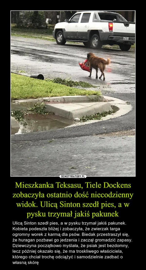 Mieszkanka Teksasu, Tiele Dockens zobaczyła ostatnio dość niecodzienny widok. Ulicą Sinton szedł pies, a w pysku trzymał jakiś pakunek – Ulicą Sinton szedł pies, a w pysku trzymał jakiś pakunek. Kobieta podeszła bliżej i zobaczyła, że zwierzak targa ogromny worek z karmą dla psów. Biedak przestraszył się, że huragan pozbawi go jedzenia i zaczął gromadzić zapasy. Dziewczyna początkowo myślała, że psiak jest bezdomny, lecz później okazało się, że ma troskliwego właściciela, którego chciał trochę odciążyć i samodzielnie zadbać o własną skórę