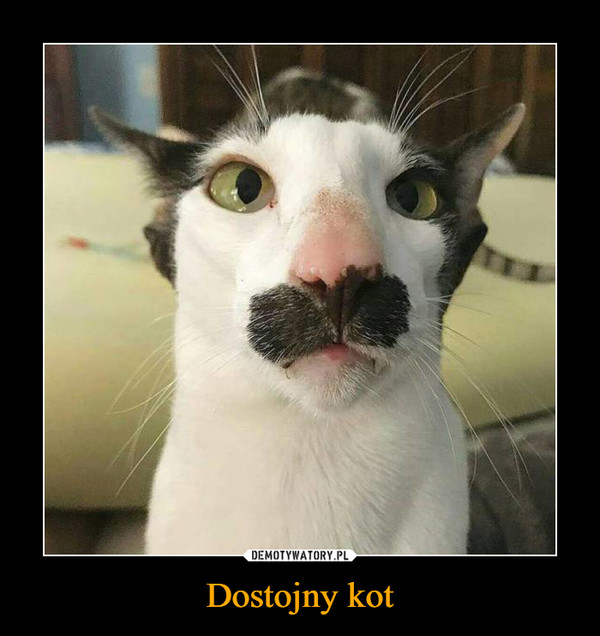 Dostojny kot –