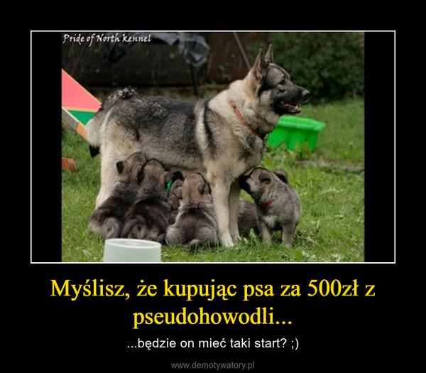 Myślisz, że kupując psa za 500zł z pseudohowodli... – ...będzie on mieć taki start? ;)