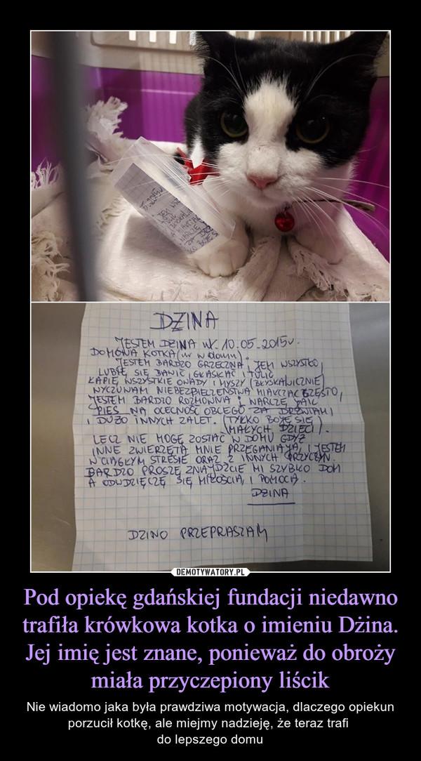 Pod opiekę gdańskiej fundacji niedawno trafiła krówkowa kotka o imieniu Dżina. Jej imię jest znane, ponieważ do obroży miała przyczepiony liścik – Nie wiadomo jaka była prawdziwa motywacja, dlaczego opiekun porzucił kotkę, ale miejmy nadzieję, że teraz trafi do lepszego domu