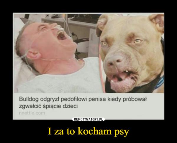 I za to kocham psy –  Bulldog odgryzł pedofilowi penisa kiedy próbowałzgwałcić śpiącie dzieci