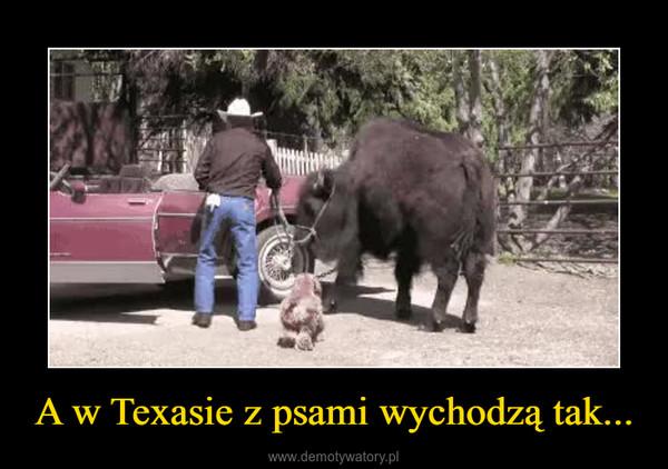 A w Texasie z psami wychodzą tak... –