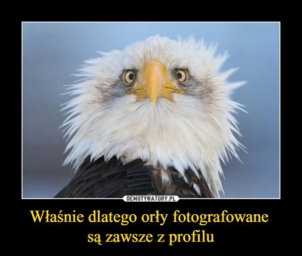 Właśnie dlatego orły fotografowane są zawsze z profilu –