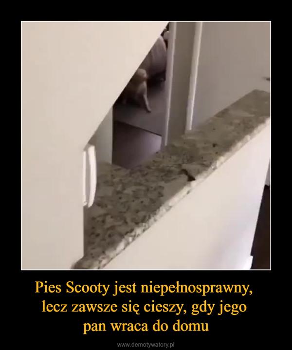 Pies Scooty jest niepełnosprawny, lecz zawsze się cieszy, gdy jego pan wraca do domu –
