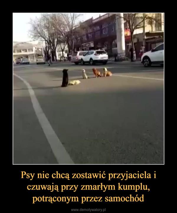 Psy nie chcą zostawić przyjaciela i czuwają przy zmarłym kumplu, potrąconym przez samochód –