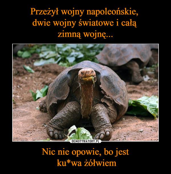 Nic nie opowie, bo jest ku*wa żółwiem –