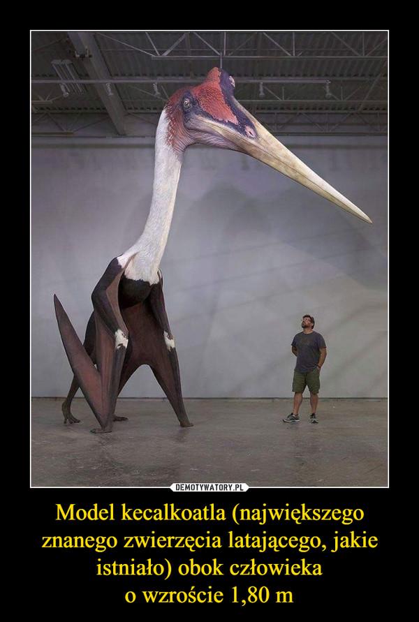 Model kecalkoatla (największego znanego zwierzęcia latającego, jakie istniało) obok człowiekao wzroście 1,80 m –