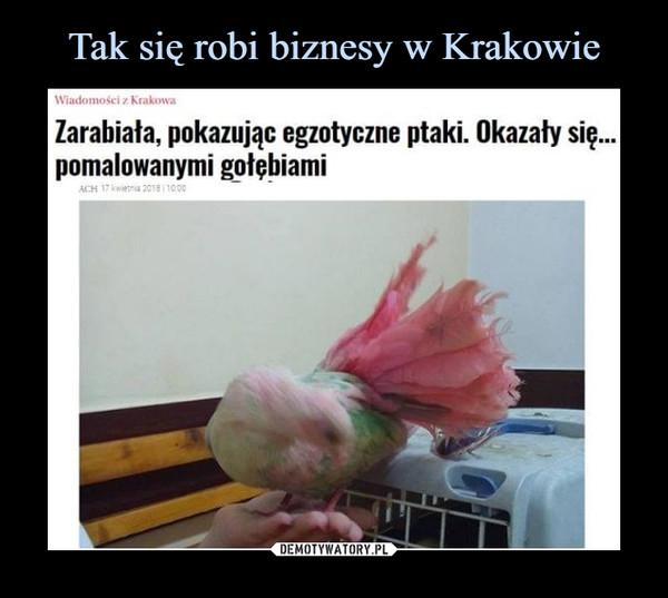 –  Wiadomości z Krakowa Zarabiała, pokazując egzotyczne ptaki. Okazały się... pomalowanymi gołębiarni