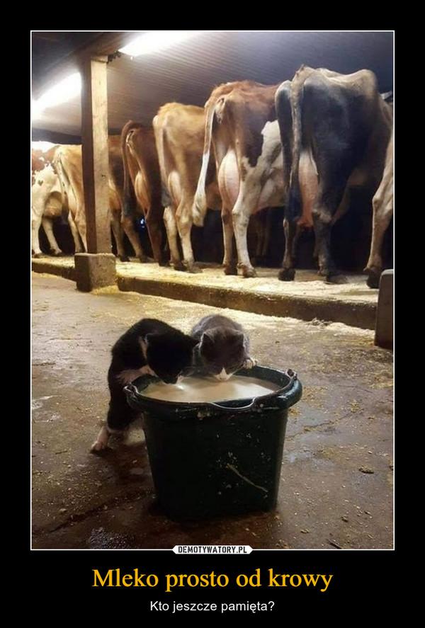 Mleko prosto od krowy – Kto jeszcze pamięta?