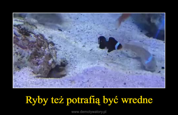 Ryby też potrafią być wredne –