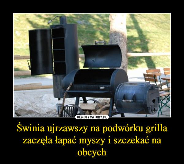 Świnia ujrzawszy na podwórku grilla zaczęła łapać myszy i szczekać na obcych –