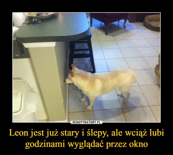Leon jest już stary i ślepy, ale wciąż lubi godzinami wyglądać przez okno –