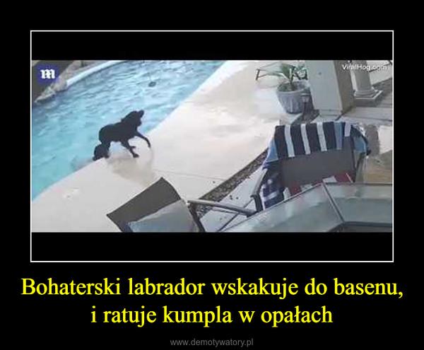 Bohaterski labrador wskakuje do basenu, i ratuje kumpla w opałach –