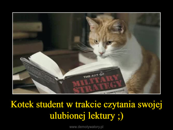 Kotek student w trakcie czytania swojej ulubionej lektury ;) –