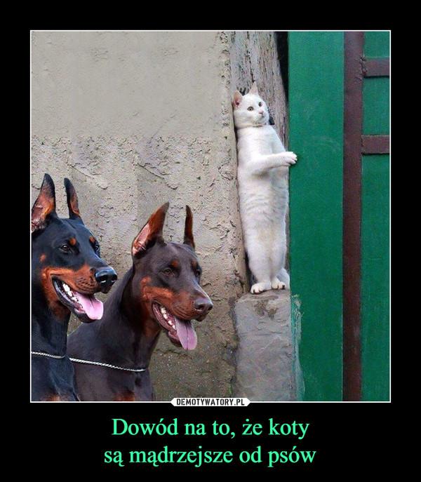 Dowód na to, że kotysą mądrzejsze od psów –