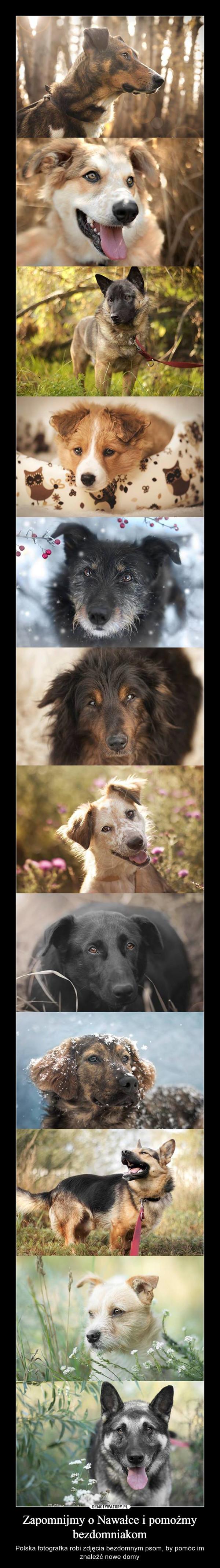 Zapomnijmy o Nawałce i pomożmy bezdomniakom – Polska fotografka robi zdjęcia bezdomnym psom, by pomóc im znaleźć nowe domy