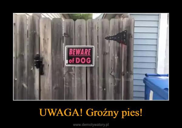 UWAGA! Groźny pies! –