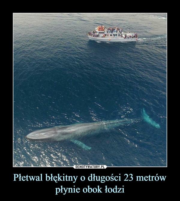 Płetwal błękitny o długości 23 metrów płynie obok łodzi –