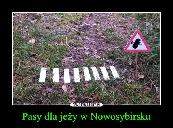 Pasy dla jeży w Nowosybirsku –