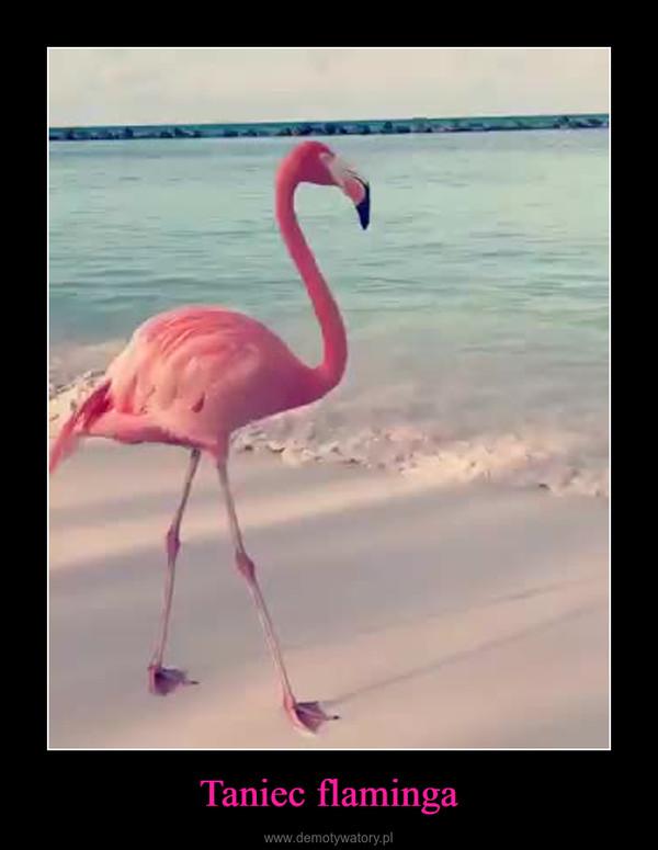 Taniec flaminga –