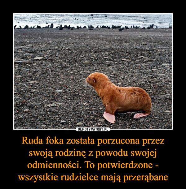 Ruda foka została porzucona przez swoją rodzinę z powodu swojej odmienności. To potwierdzone - wszystkie rudzielce mają przerąbane –