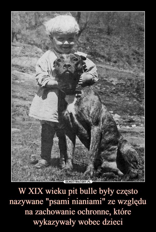 """W XIX wieku pit bulle były często nazywane """"psami nianiami"""" ze względu na zachowanie ochronne, które wykazywały wobec dzieci –"""