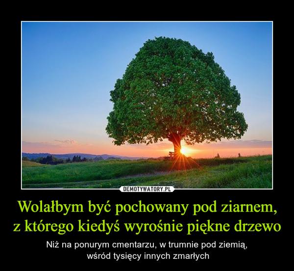 Wolałbym być pochowany pod ziarnem, z którego kiedyś wyrośnie piękne drzewo – Niż na ponurym cmentarzu, w trumnie pod ziemią, wśród tysięcy innych zmarłych
