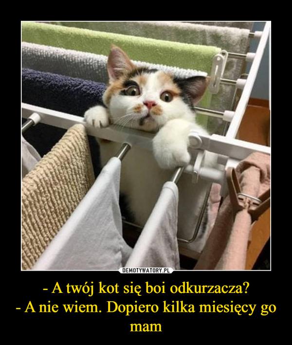 - A twój kot się boi odkurzacza?- A nie wiem. Dopiero kilka miesięcy go mam –