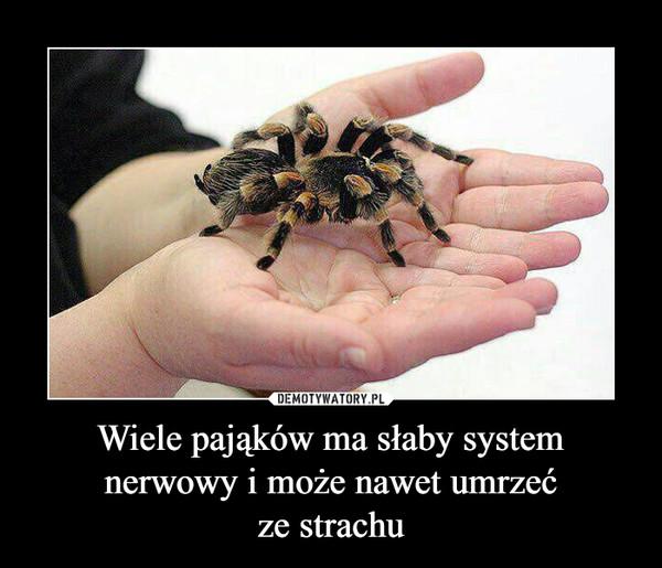 Wiele pająków ma słaby system nerwowy i może nawet umrzećze strachu –