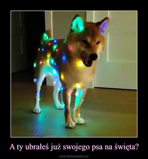 A ty ubrałeś już swojego psa na święta? –