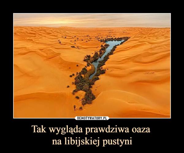 Tak wygląda prawdziwa oaza na libijskiej pustyni –