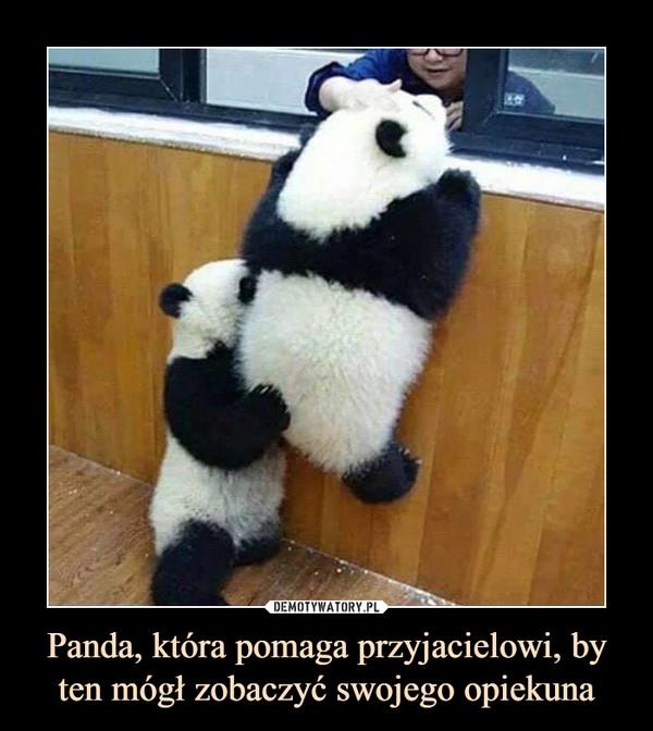 Panda, która pomaga przyjacielowi, by ten mógł zobaczyć swojego opiekuna –