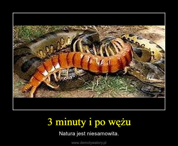 3 minuty i po wężu – Natura jest niesamowita.