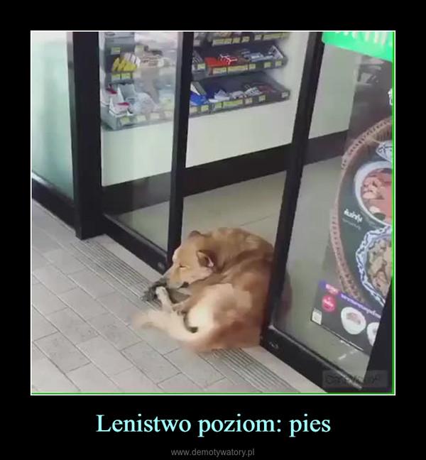 Lenistwo poziom: pies –