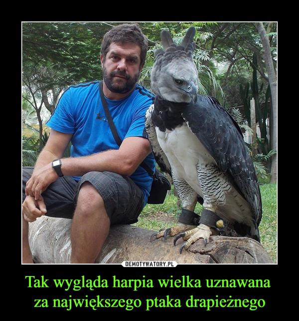 Tak wygląda harpia wielka uznawana za największego ptaka drapieżnego –
