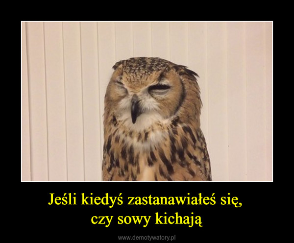 Jeśli kiedyś zastanawiałeś się, czy sowy kichają –