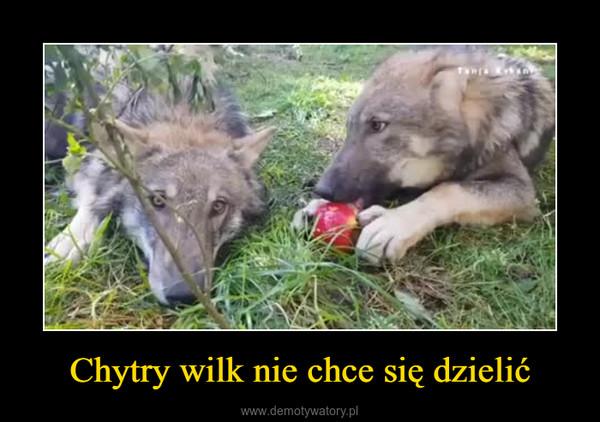 Chytry wilk nie chce się dzielić –