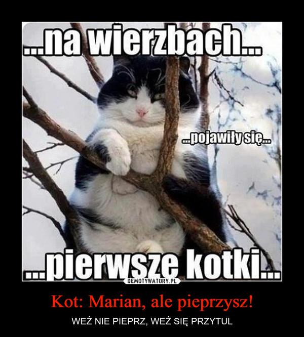 Kot: Marian, ale pieprzysz! – WEŹ NIE PIEPRZ, WEŹ SIĘ PRZYTUL
