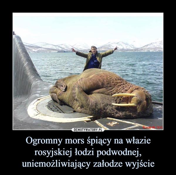 Ogromny mors śpiący na włazie rosyjskiej łodzi podwodnej, uniemożliwiający załodze wyjście –
