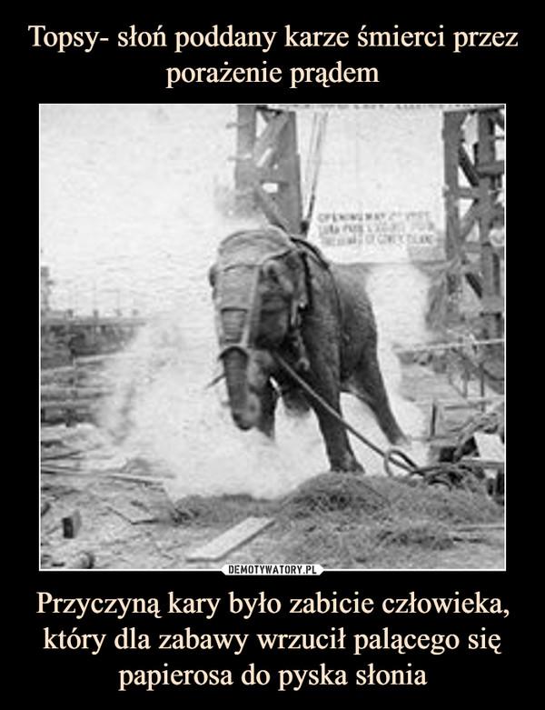 Przyczyną kary było zabicie człowieka, który dla zabawy wrzucił palącego się papierosa do pyska słonia –