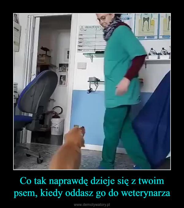Co tak naprawdę dzieje się z twoim psem, kiedy oddasz go do weterynarza –