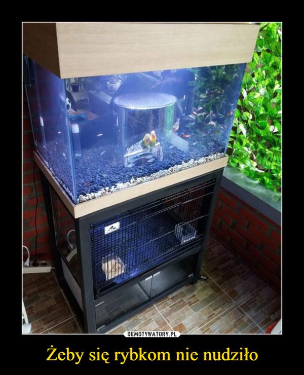 Żeby się rybkom nie nudziło –