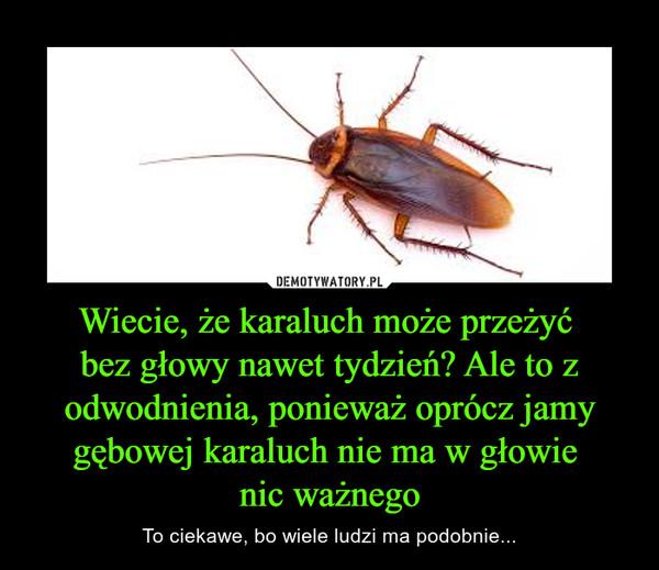 Wiecie, że karaluch może przeżyć bez głowy nawet tydzień? Ale to z odwodnienia, ponieważ oprócz jamy gębowej karaluch nie ma w głowie nic ważnego – To ciekawe, bo wiele ludzi ma podobnie...
