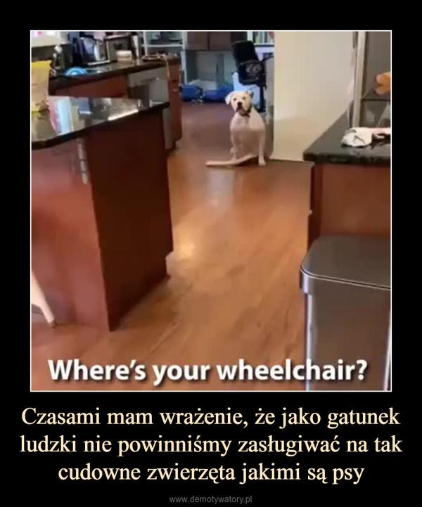 Czasami mam wrażenie, że jako gatunek ludzki nie powinniśmy zasługiwać na tak cudowne zwierzęta jakimi są psy –