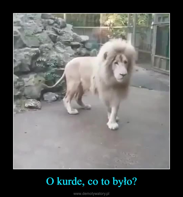 O kurde, co to było? –