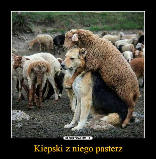 Kiepski z niego pasterz –