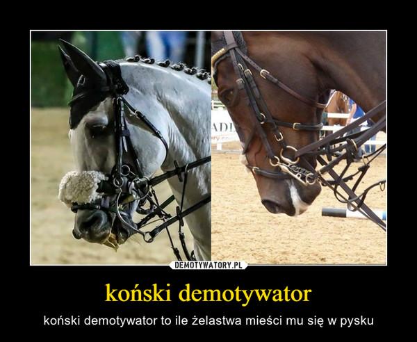 koński demotywator – koński demotywator to ile żelastwa mieści mu się w pysku