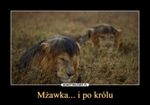 Mżawka... i po królu –