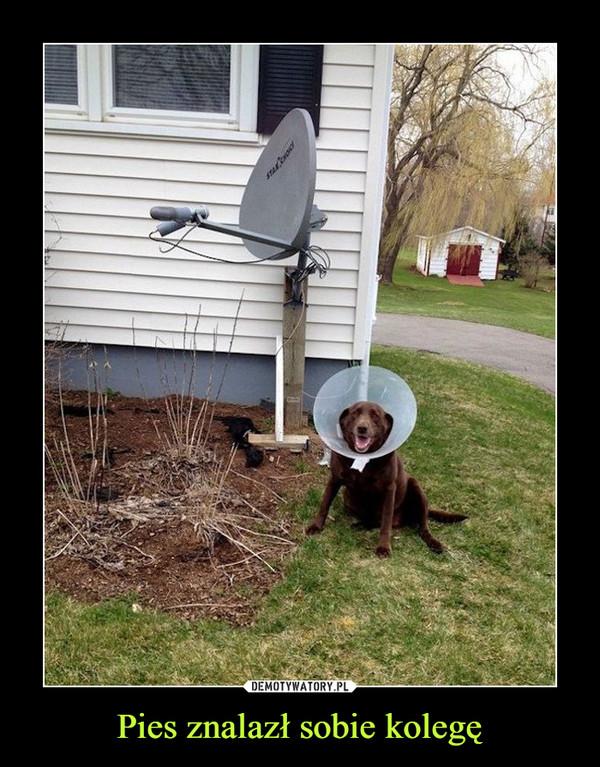 Pies znalazł sobie kolegę –